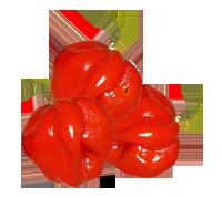 moruga-red-pepper