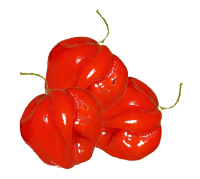 moruga-red-pepper